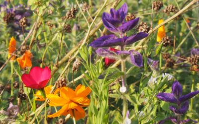 Fest der Lebensfreude, der Gemeinschaft in und mit der Natur am 24.07.2021